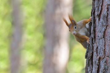 Eichhörnchen-1234