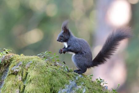 Eichhörnchen-1281