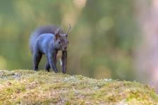 Eichhörnchen-2224