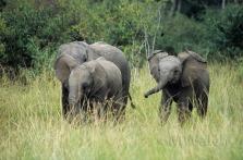 elefanten-04