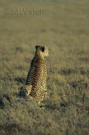 gepard-01